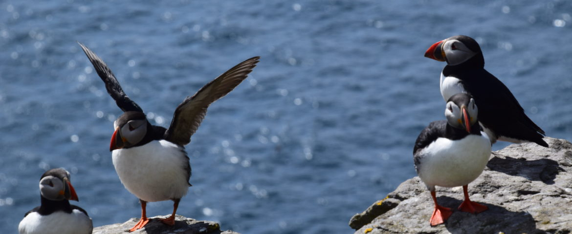 A Return to Skellig Michael: A Guest Blog by Paul Loughlin